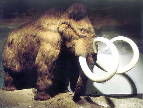 Clonazione di un Mammut: scienziati di Kyoto cercheranno di riportarlo in vita