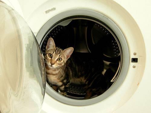 Sadismo e violenza: infila il gatto nell'asciugatrice e mette il video online