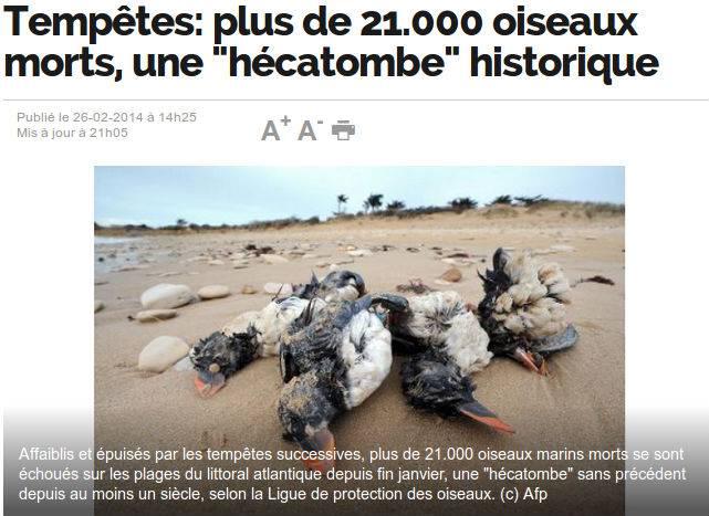 Francia: 21 mila uccelli marini morti per sfinimento e fame