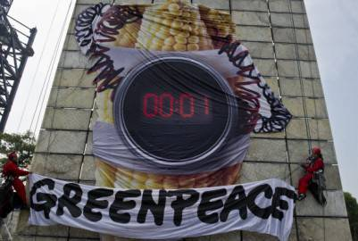 Proteste Greenpeace contro Ogm (Getty images)