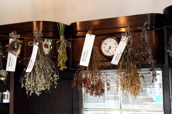 In corso a Roma un workshop sulle piante officinali