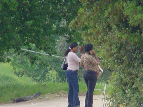 PROSTITUZIONE IN ABBRUZZO / Bosco raso al suolo perchè favoriva l'attività delle lucciole
