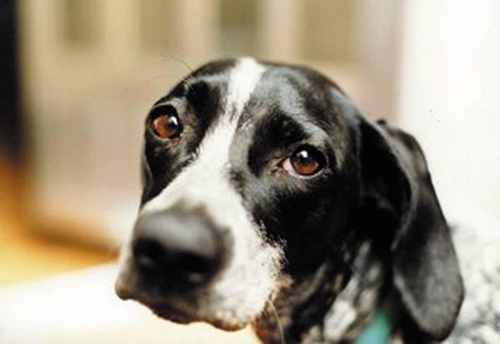 Aidaa: calo del 50% delle segnalazioni animali nel giorno di ferragosto
