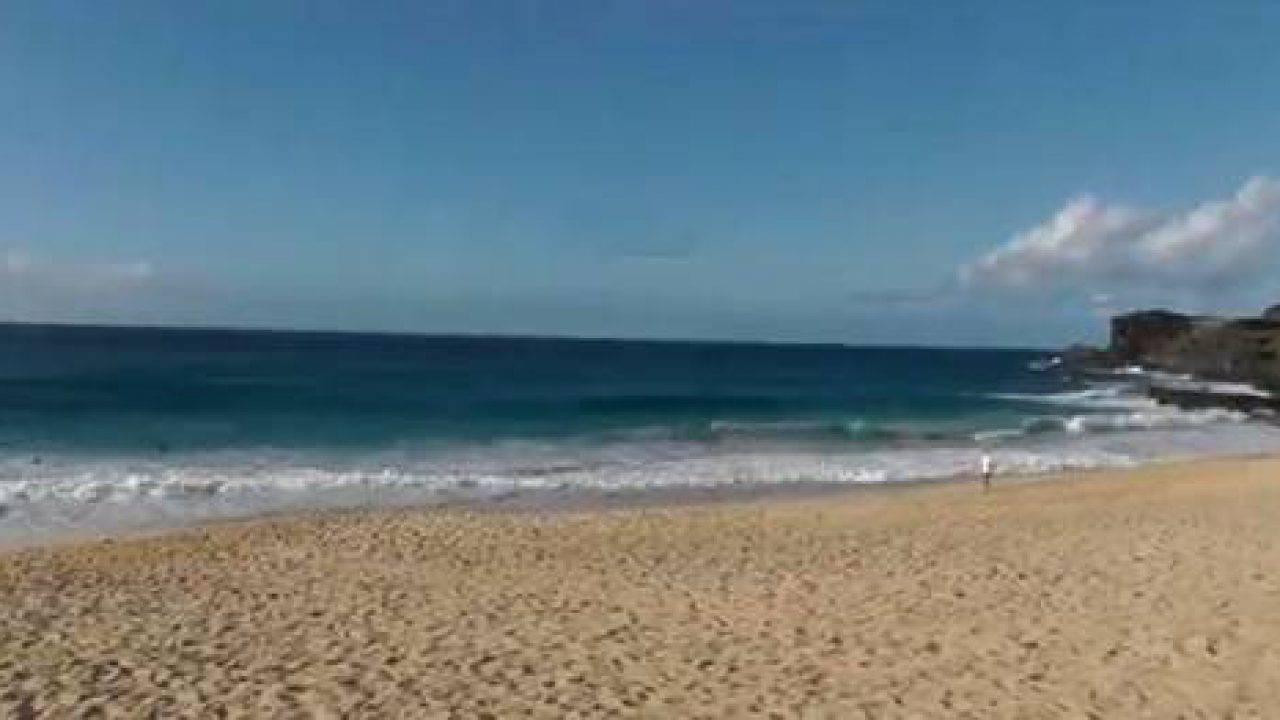 Contea Di Honolulu Hawaii hawaii: turista tedesca aggredita da squalo