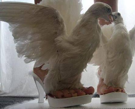 il migliore buona vendita scarpe autunnali Le scarpe fatte con gli zoccoli di cavallo: la moda più trendy per ...