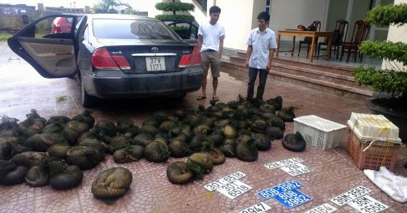 Cina: nuova legge contro chi mangia animali in via d'estinzione