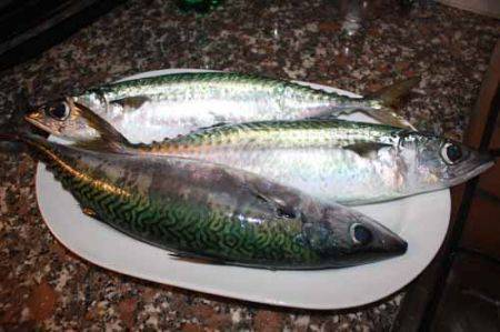 Sgombro: il pesce dai grassi buoni che fa bene al cuore