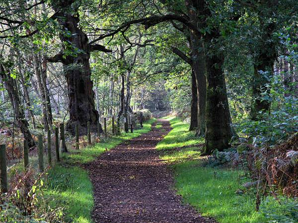 Il premier britannico Cameron salva la foresta di Sherwood