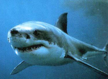 Uno squalo uccide una turista tedesca a Sharm El Sheikh (Egitto)
