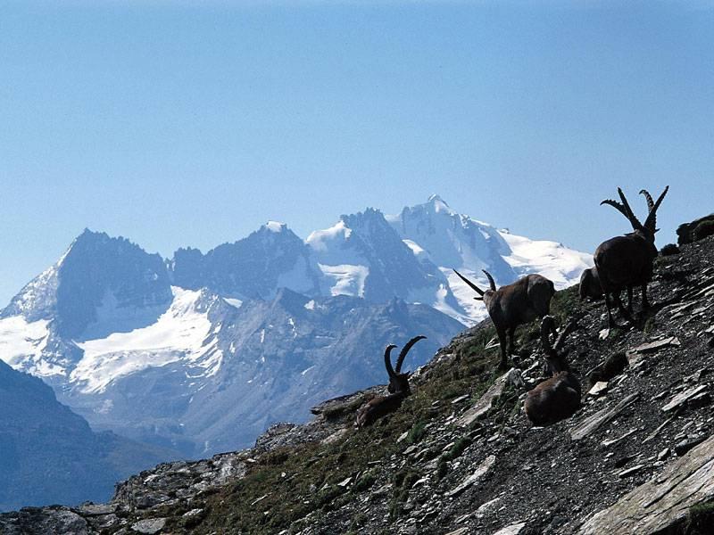 Morte sul Gran Paradiso. Precipita un escursionista sloveno