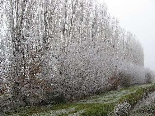 Maltempo: allerta gelo in Emilia Romagna