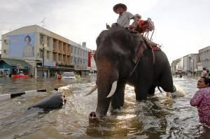 Thailandia: pericolo coccodrilli dopo inondazioni