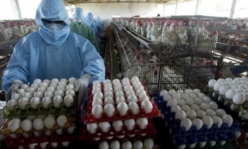 Diossina: l'Ue impone alla Germania di abbattere gli animali contaminati