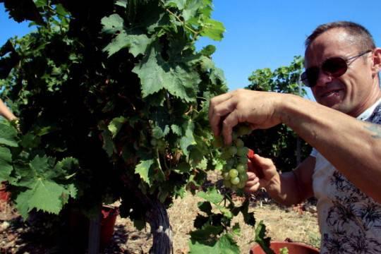 Wine kit contraffatti, scoperta maxifrode internazionale